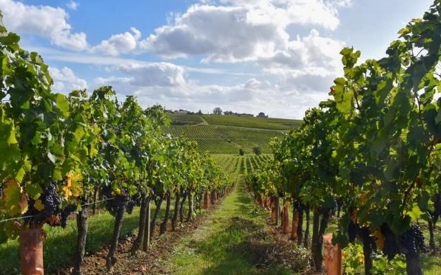 Blaye vineyards