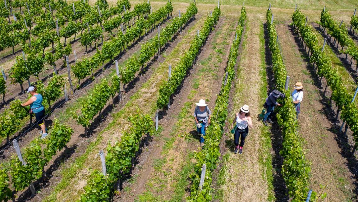 Excursion Pique-Nique au coeur des vignes - 1